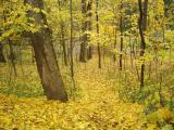 И снова всюду осень на дворе...