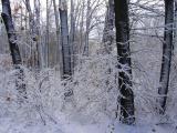 Альбом от Уманчанки - отзвук снежного урагана 11.11.2007