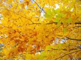 Альбом от Уманчанки - Осень в Софиевке - 2007