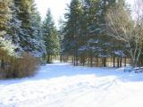 На лыжах в Софиевке с Аллой Зили