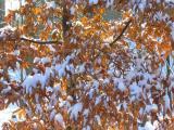 """Альбом от Уманчанки """"Зима... как много в ней оттенков разных..."""""""