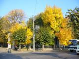 Фото старого  городского парка от Уманчанки