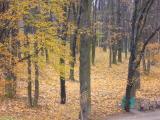 Седой ноябрь бредет по желтым листьям