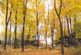Софиевка. Осенний мотив
