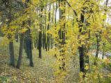 Осень в Софиевке, ч.1 от Уманчанки. Октябрь 2006