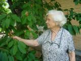 Росте черешня в мами на городI
