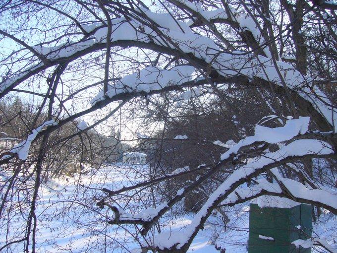 Прогулка по зимней Софиевке