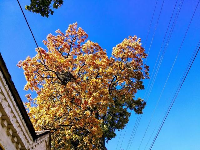 Осенние замки