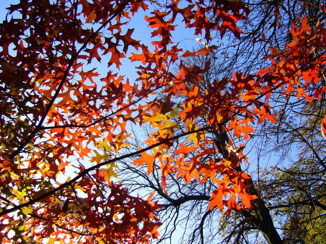 Тронула деревья позолотой