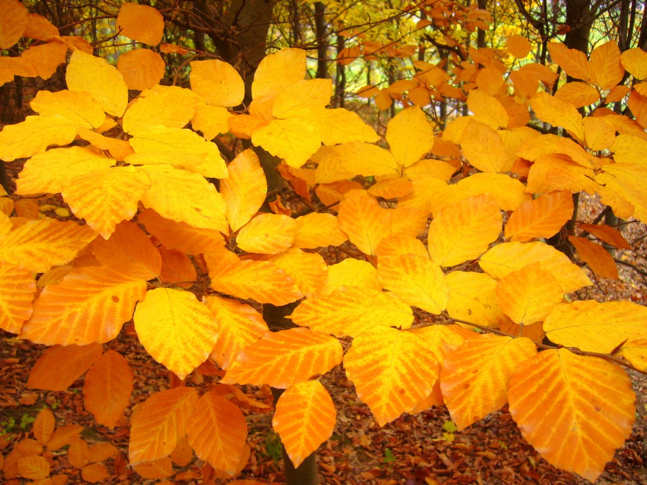 Осенний пасьянс