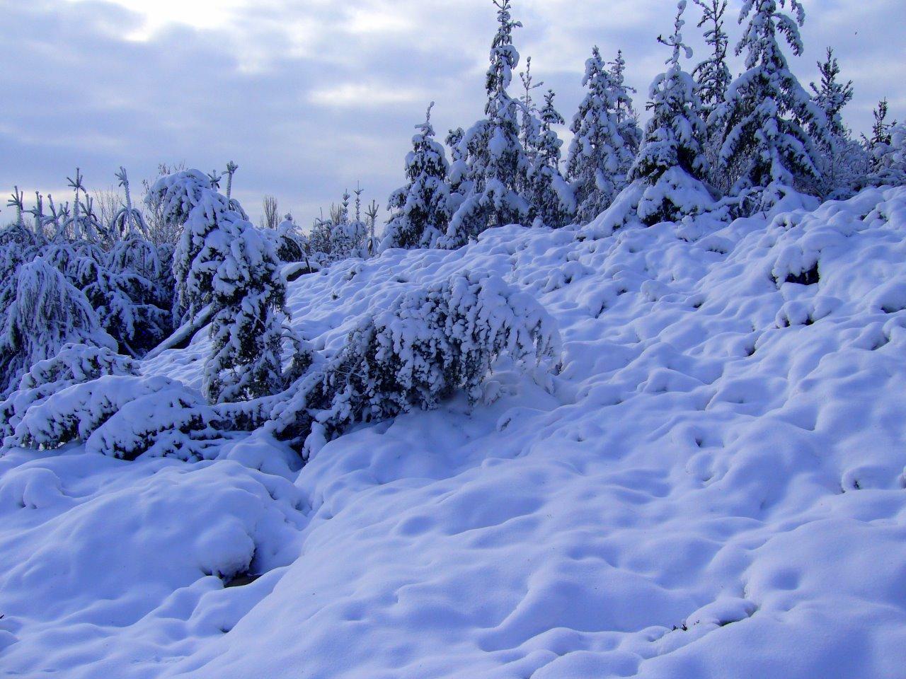 А сніг летів