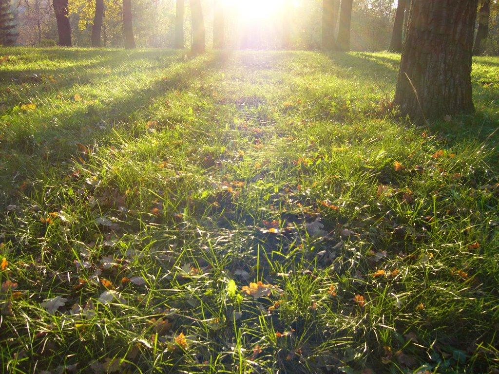 Паутинки на траве