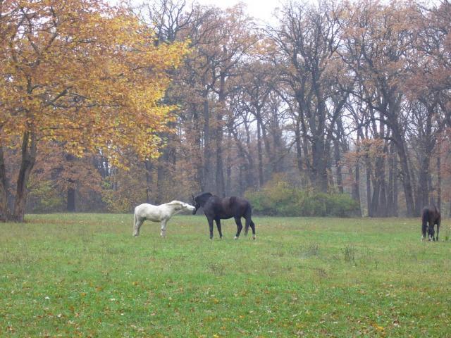 Лошадиная любовь 1