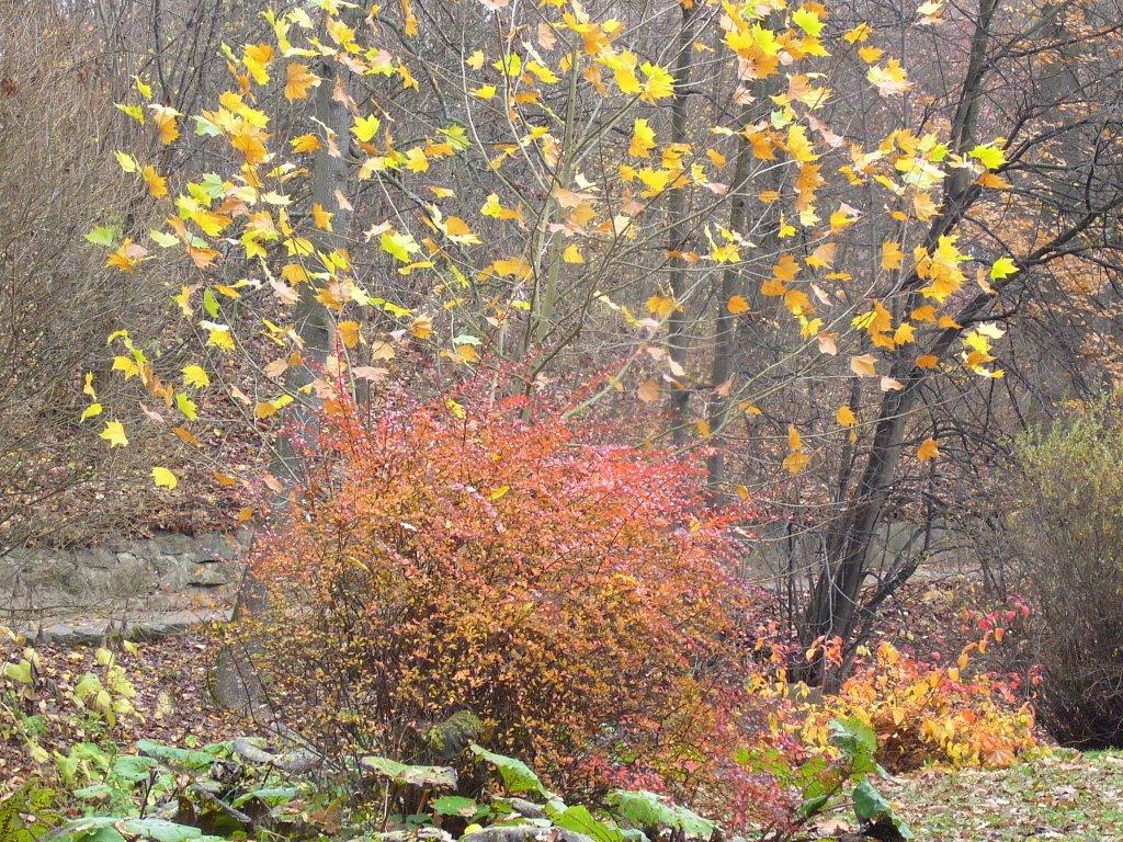 Осенний пейзаж 1