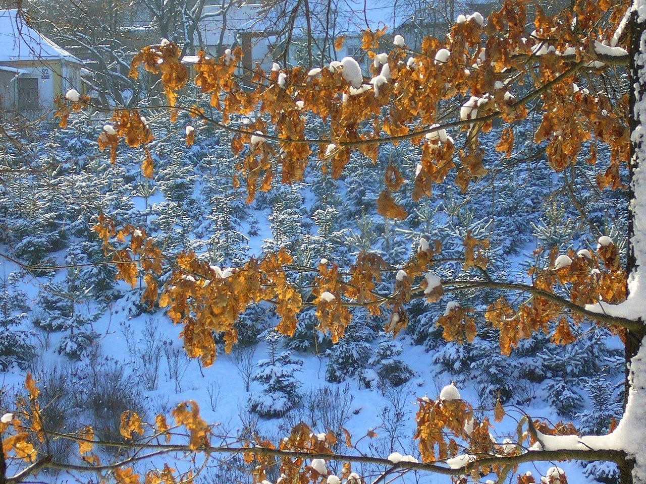 Зима, и тишина, и вечность
