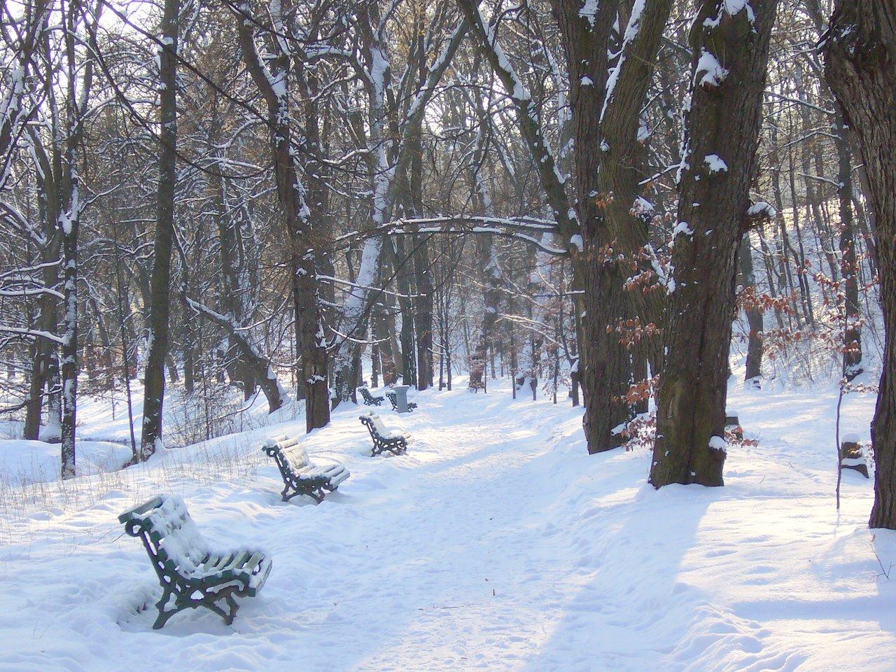 Какая снежная зима