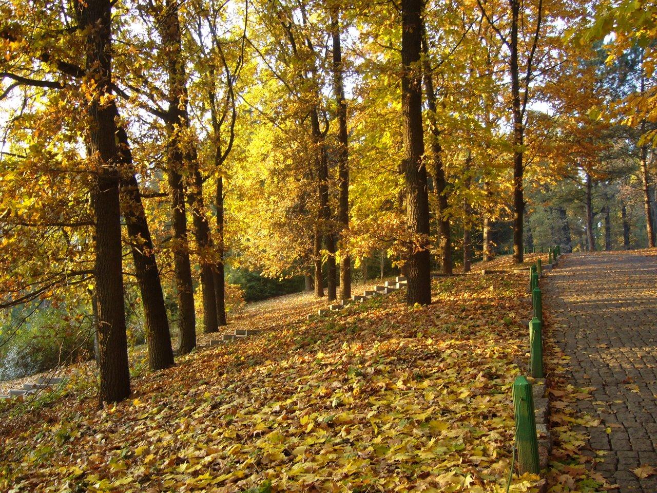 Дорога длиною в осень 9
