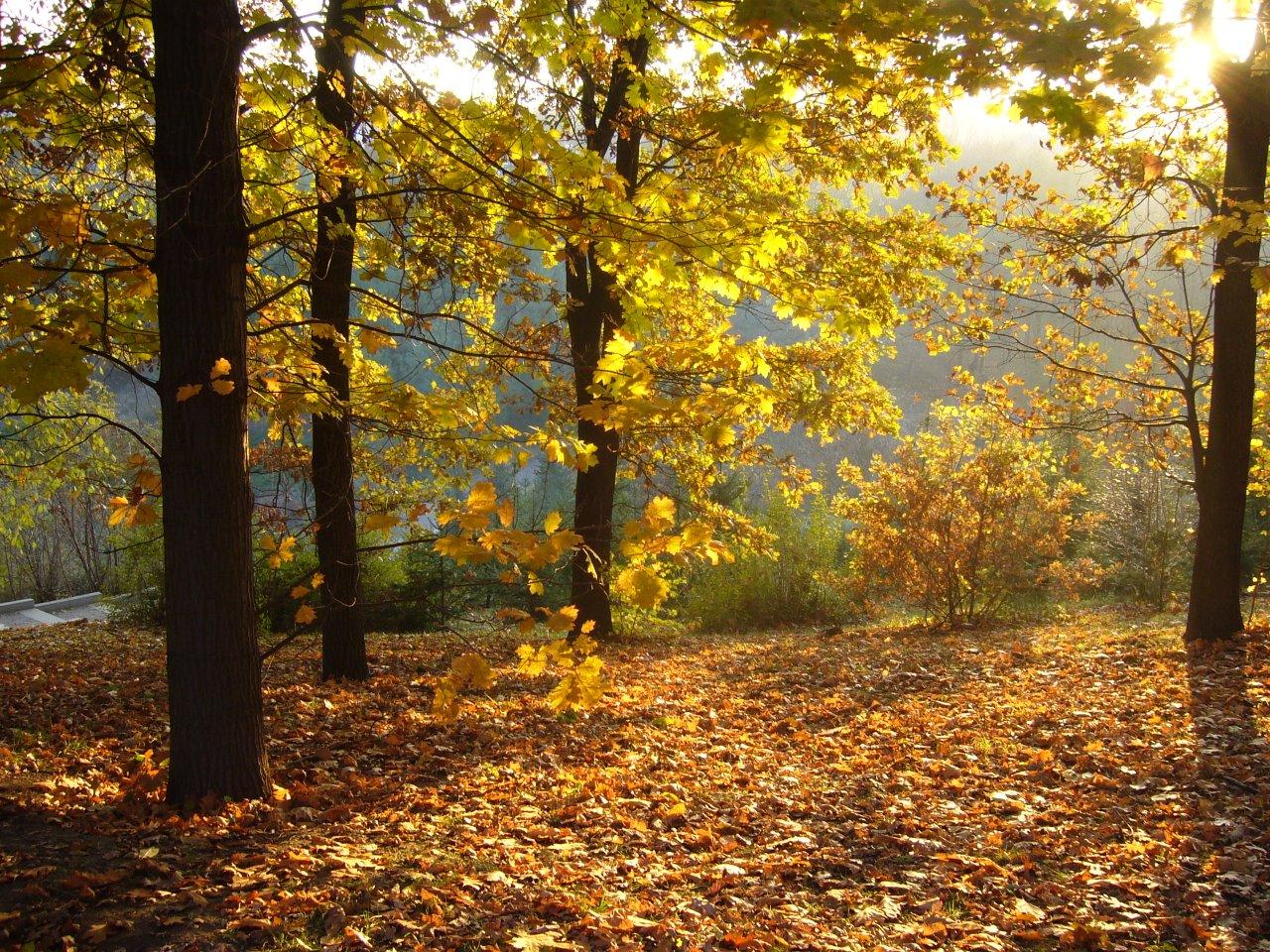 Дорога длиною в осень 13