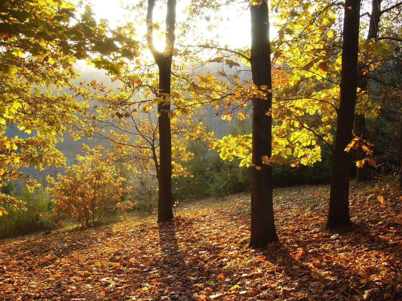 Дорога длиною в осень 12