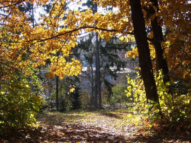 Дорога длиною в осень