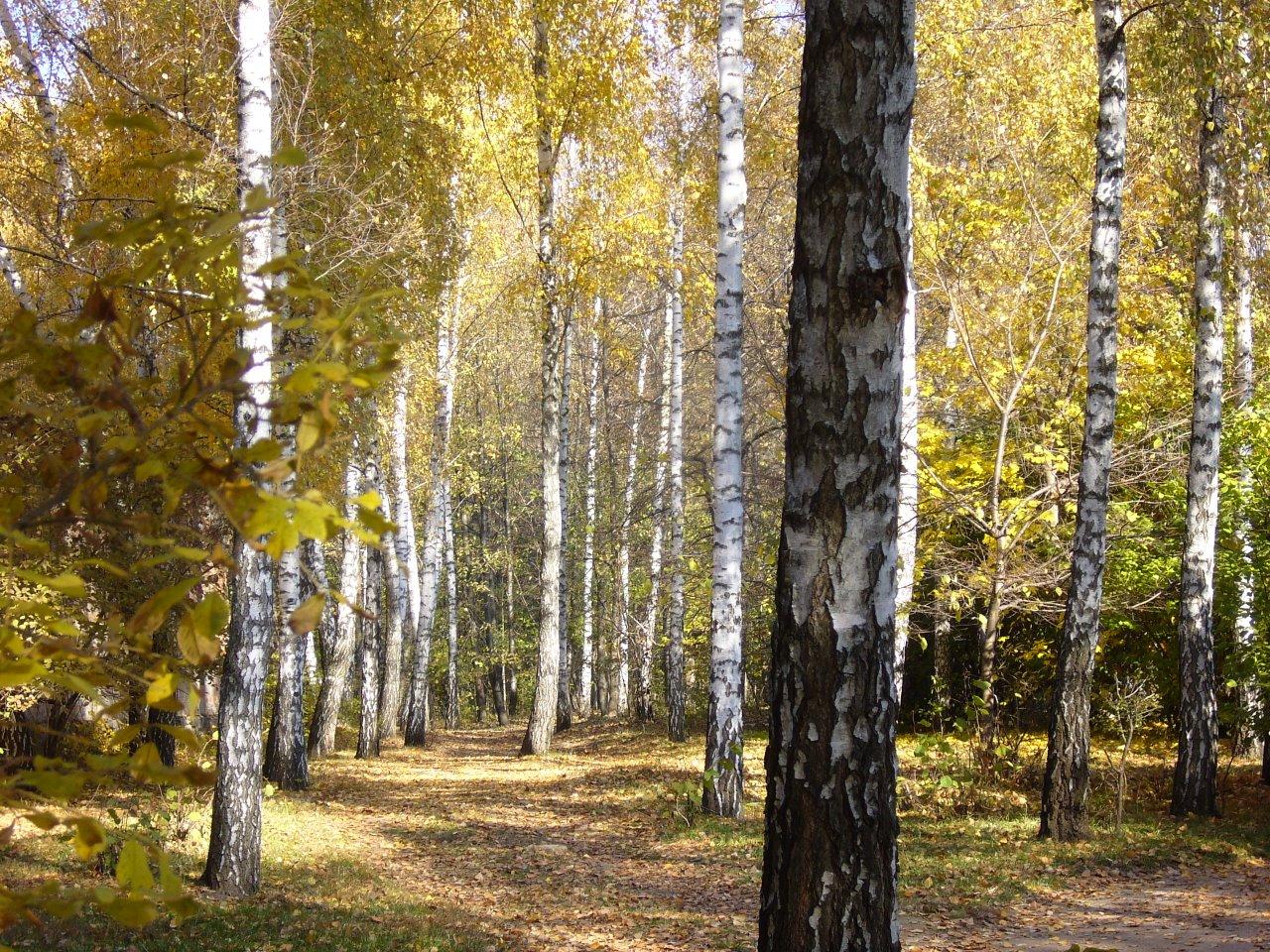 Дорога длиною в осень 2