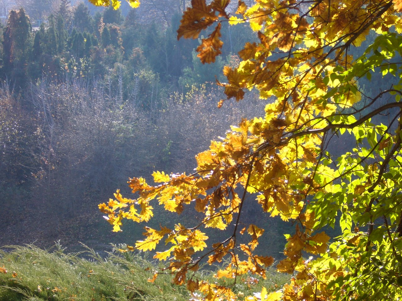Дорога длиною в осень 8