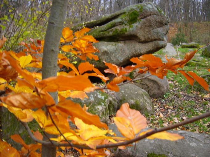 Осенний бук