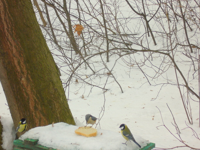 Птичий Новый год